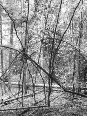 wald bruch foto: an.thon